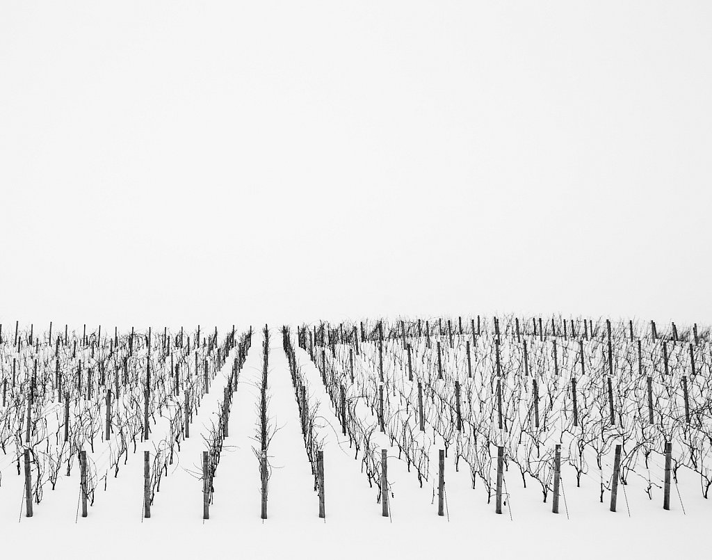 vineyard on a snow day