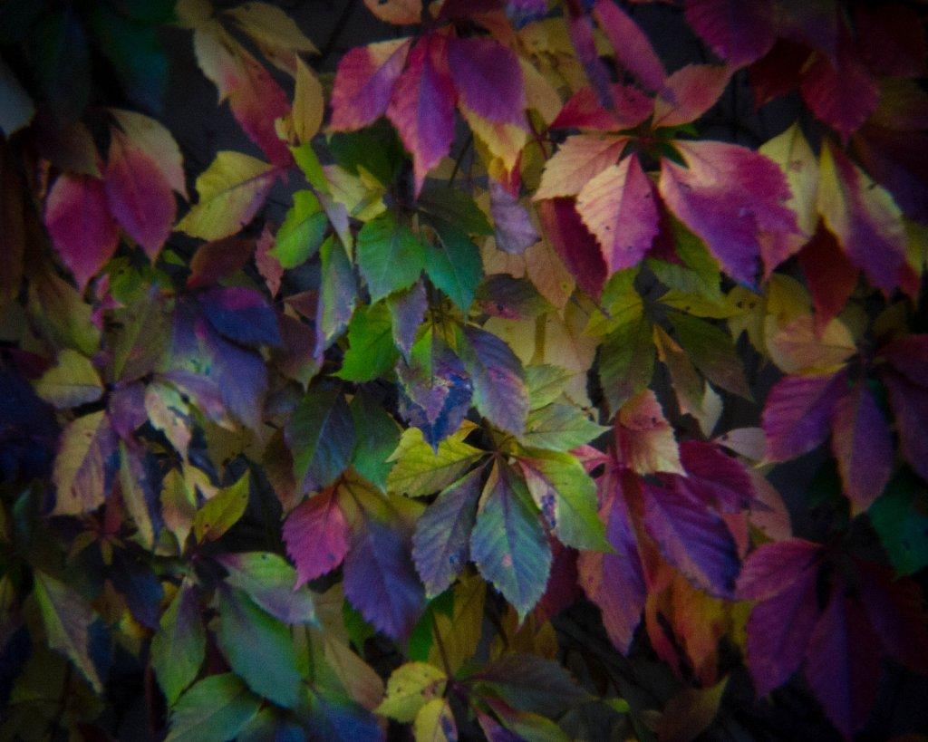 fall leaves 1