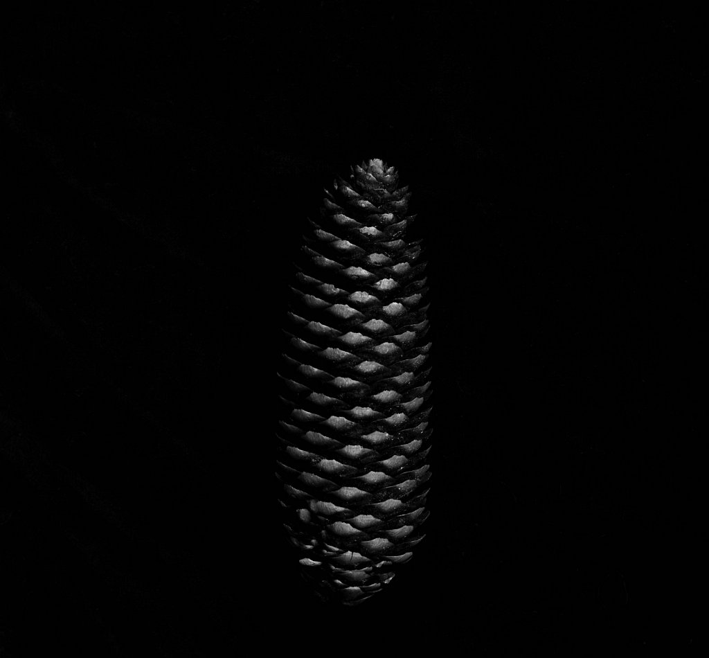 blackcone1x1c.jpg