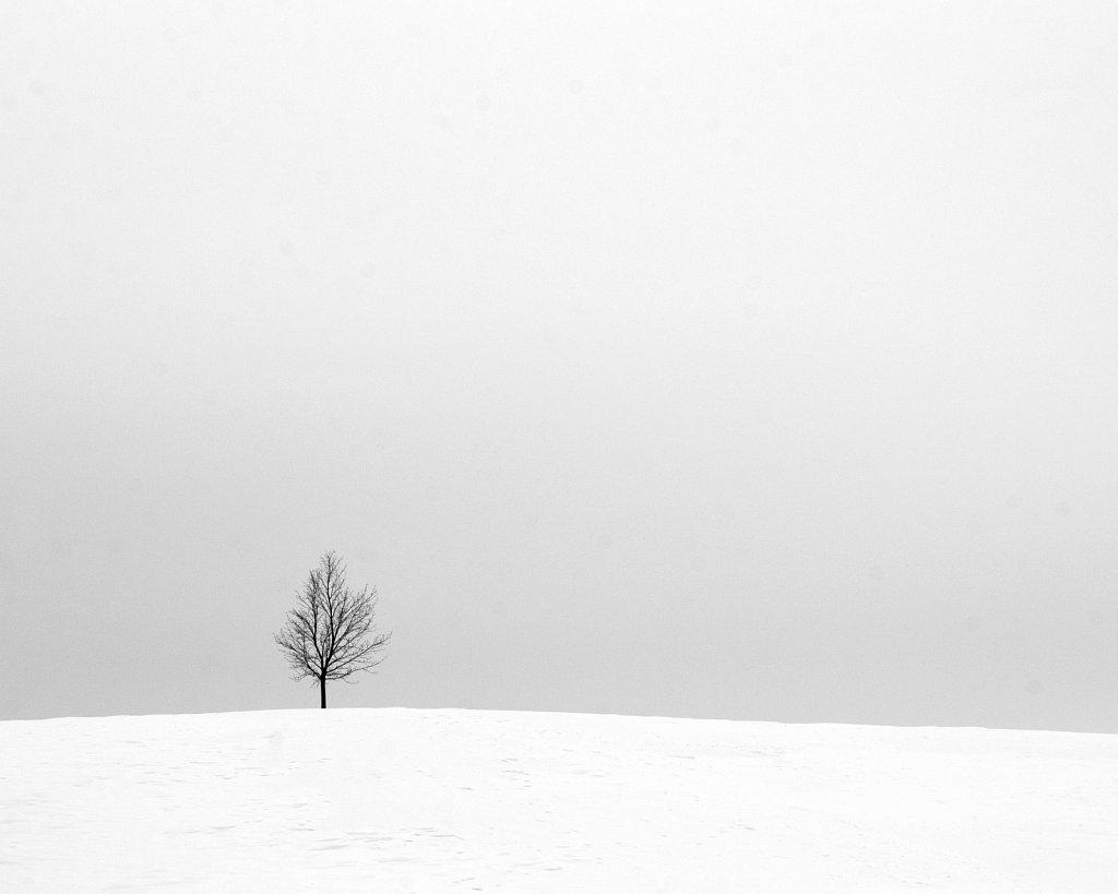 snow tree hill